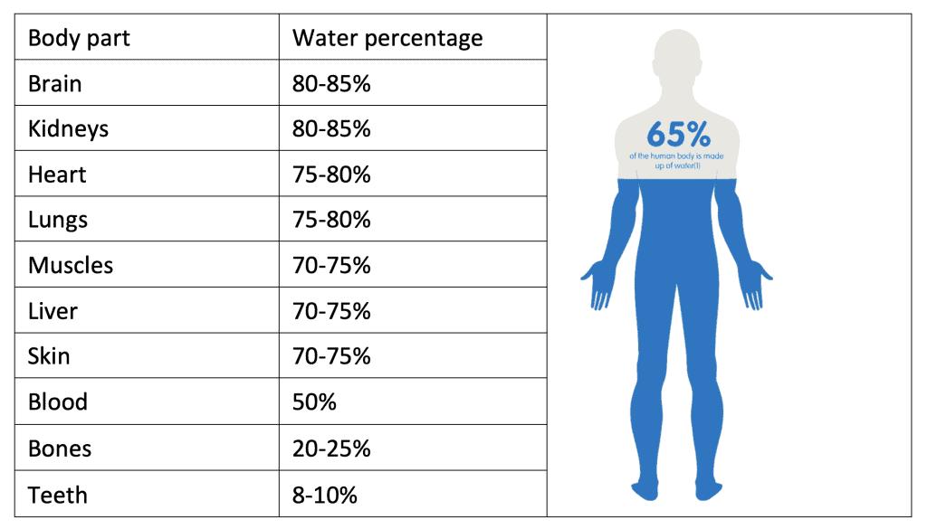 Body Water