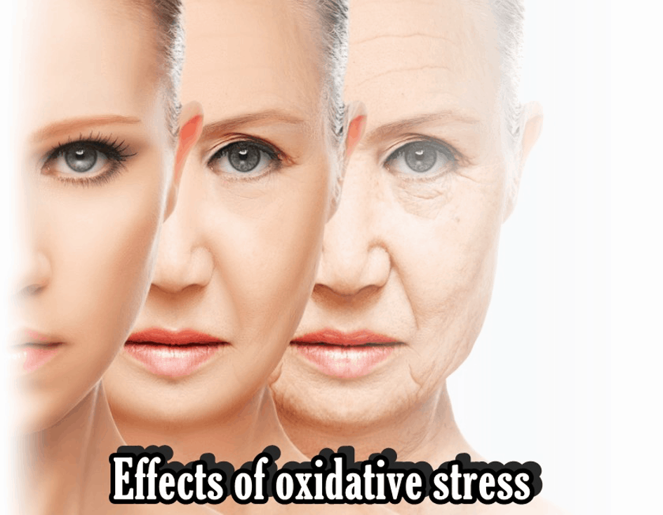 Effects of Exidative Stress