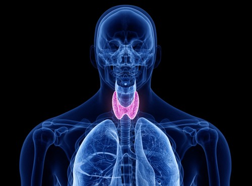 Improved thyroid with intermittent fasting